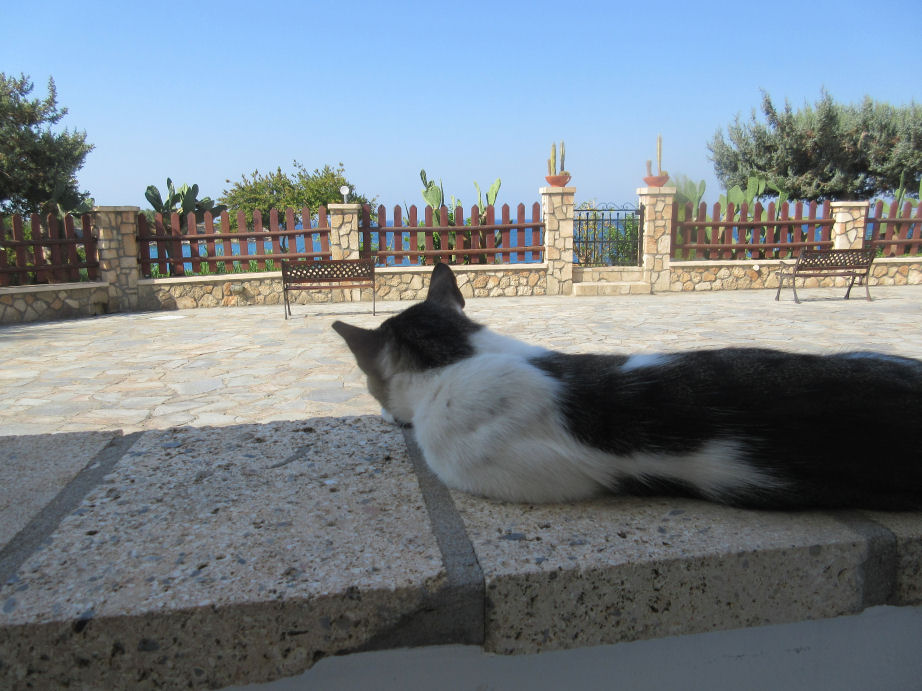 Cats in Pefkos.