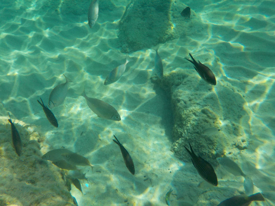 A Guide to Snorkelling in Pefkos